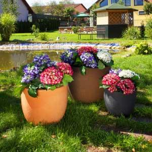 OKIROTO program Garden