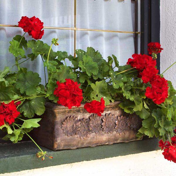 ROTO PLANIKA korito za cvijeće