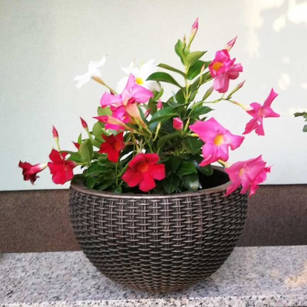 ROTO Bambus H korito za cvijeće